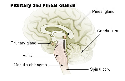 decalcify pineal gland