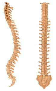 meditation instructions spine s curve